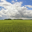 Country landscape. — Stock Photo