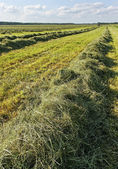 Land landskap. — Stockfoto
