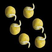 Growing pea. — Stock Photo