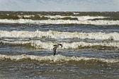 Baltische zee. — Stockfoto
