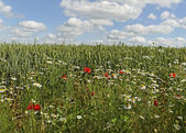 Weeds in a field. — Stock Photo