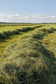 Mowed hay. — Stock Photo