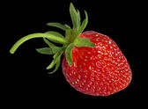 Ripe strawberry. — Foto Stock