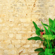 Old brick wall with a plant with green leaves — 图库照片