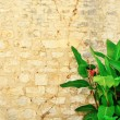 Old brick wall with a plant with green leaves — Stock Photo