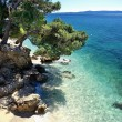 Amazing beach with cristalic clean water with pines in Croatia — Stock Photo #25163607