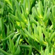 Bright green grass background — Stock Photo