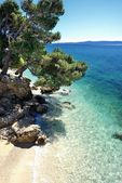 Amazing beach with cristalic clean water with pines in Croatia — Stok fotoğraf