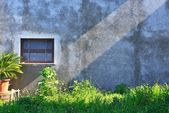 Grungy old wall of house, grown with wild grass with a strip of — Stock Photo