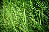 Green grass field background — Stock fotografie