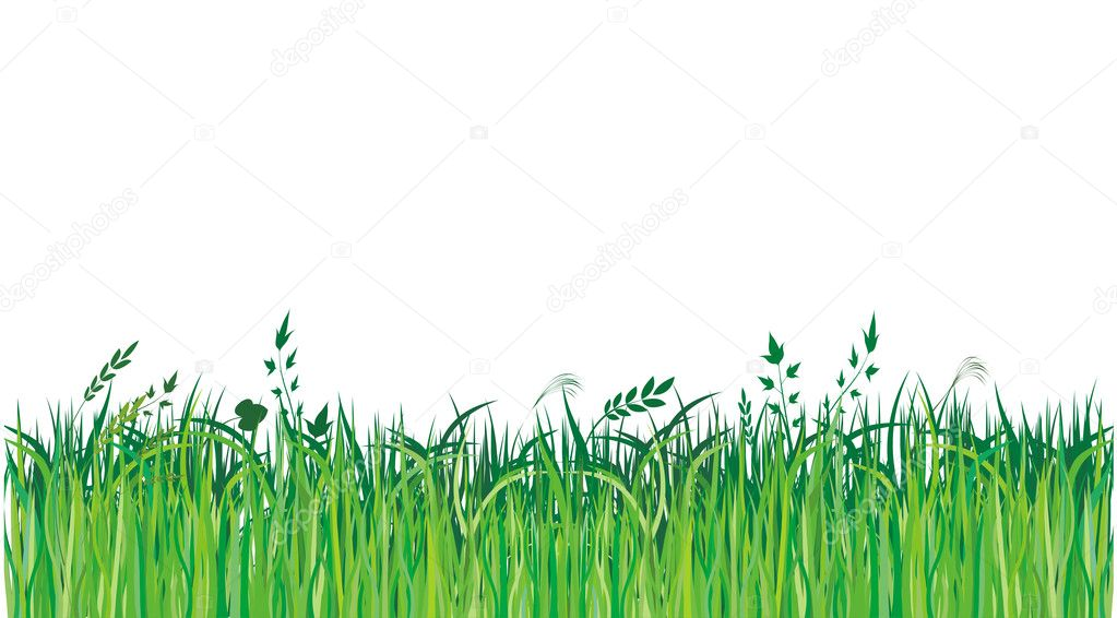 绿色grassi 矢量图