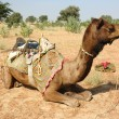 Stock Photo: Camel safari in Thar desert,Rajastan,India