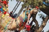 Beautiful decorated dromedary camel at camel fair,Pushkar,India — Stock Photo