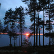 Beautiful sunset in pine forest,Karelia, Nothern Russia — Stock Photo