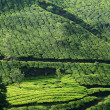 Stock Photo: Beautiful fresh green tegardens in Munnar ,Kerala,India