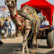 : Decorated camel and his owner are going to take part at annual pushkar camel mela (fair),India — Stock Photo