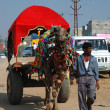 Decorated camel and his owner are going to take part at annual pushkar camel mela (fair),India — Stock Photo
