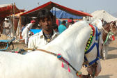 Young indian gypsy nomad with white horse preparing to horse dance performance at Pushkar camel fair,India — Foto Stock