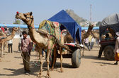 Tribal nomad cameleer taking part at famous camel fair in hindu holy town Pushkar,India — Stock Photo