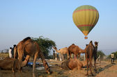 Hot air balloon flying over tribal nomad camel camp early in the morning,Pushkar,India — Stock Photo