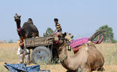 Nomadic gypsy people are preparing to traditional cattle fair holiday,India — Stock Photo