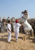 Tribal nomad man taking part at horse dance competition,cattle fair,India — Stock Photo