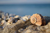 Still life with the seashell and fishing net on the beach — Stock Photo