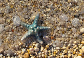 Starfish in the surf — Foto Stock