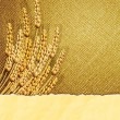 Ears of wheat on burlap background with cardboard strip — Stockvectorbeeld