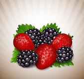 Strawberries and blackberry with leaves — Stock Vector