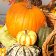 Autumnal basket. Halloween — Stockfoto