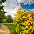 Public park in summer — Stock Photo