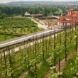 Vineyard in Prague with view on Troja Castle — Stock Photo
