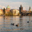 Stock Photo: Prague. Vltavriver and Charles bridges