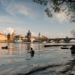 Prague. Vltava river and Charles bridges — Стоковая фотография