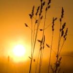 pajęczyna z rosy w magiczne światło wschodzącego słońca, jesieni — Zdjęcie stockowe
