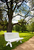 Beautiful white bench in public park — Stock Photo