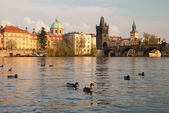 Prague. Vltava river and Charles bridges — Stockfoto