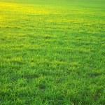 Green lawn — Stock Photo #1068920