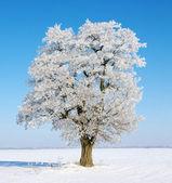 Träd i frost — Stockfoto