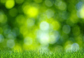 Grass and green background — Stock Photo