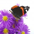 Colorful butterfly — Stock Photo #19749657