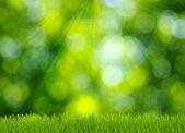 травы и зеленый фон — Стоковое фото