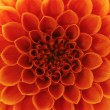 Stock Photo: Abstract petals