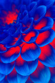 Fiore di fuoco blu scuro — Foto Stock