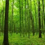 Trees — Stock Photo #20828993