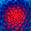 dark blue fire flower — Stock Photo