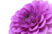 Flor abstracta — Foto de Stock
