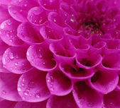 Flower and drops — Stock Photo