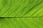 绿叶纹理 — 图库照片
